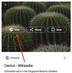 bilder google bildersuche